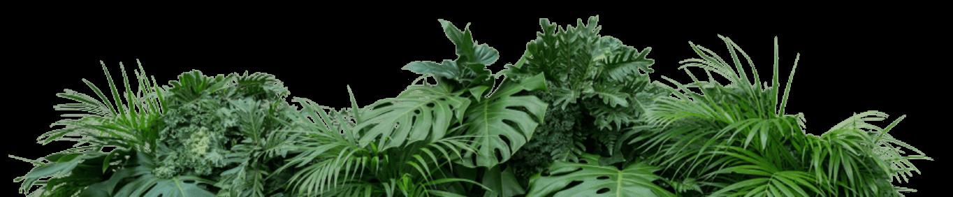 Bixahuman Plants Deco Top